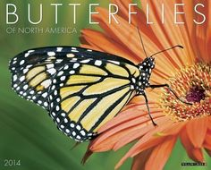 Butterflies 2014 Wall Calendar by Willow Creek Press, http://www.amazon.com/dp/1607558157/ref=cm_sw_r_pi_dp_WwwDsb0SHCEA6