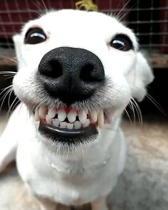 Want your dog to be this happy?? Give them a dog puzzle and watch them play!