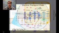 photosynthesis and cellular respiration worksheet Google
