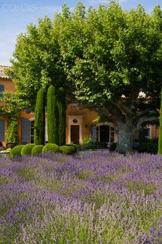 Holiday home in Provence , France Valensole, Lavender Fields, Lavender Cottage, Lavander, Exterior, Provence France, French Countryside, South Of France, Beautiful Gardens