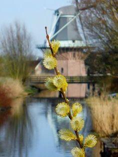 Hollandse molen.