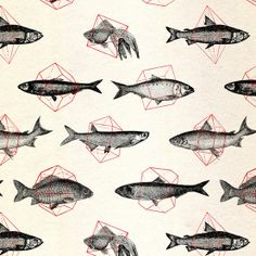 Fish_inshapes