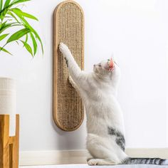 7 Ruby Road Cat Scratching Post for Floor or Wall Mounted Use - Space-Saving, Durable Sisal Board Scratcher for Kitty's Health and Good Behavior, Furniture Scratch Deterrent Accessories for Cats Diy Furniture Hacks, Pet Furniture, Barbie Furniture, Garden Furniture, Diy Furniture Renovation, Modern Cat Furniture, Diy Furniture Cheap, Furniture Design, Kitchen Furniture