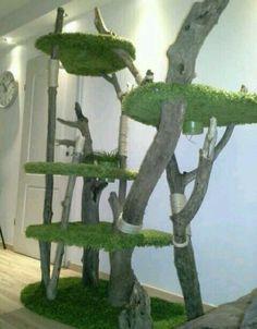Plants, Tree Structure, Plant, Planets