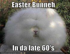 Easter Bunneh