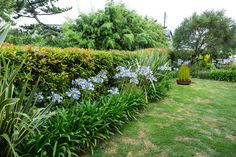 視界が開けた庭は、向いの家の木々も楽しめる。「松竹梅が揃っているんです(笑)」。