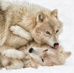 beautiful-fauna: Fechar Amigos de Daniel Parent
