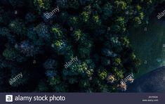 Dieses Stockfoto: Tree Tops aus der Luft - 2A1RA3A aus der Alamy-Bibliothek mit Millionen von Stockfotos, Illustrationen und Vektorgrafiken in hoher Auflösung herunterladen. Tree Tops, Illustration, Landscape, Scenery, Illustrations, Corner Landscaping