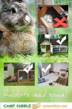 The do's and dont's of rabbit housing. | Thinking of selling or buying in San Bernardino or Riverside Counties? Contact George Lawson today: 951-324-5053