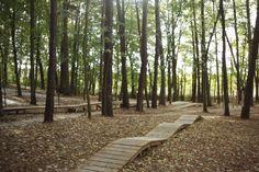 Iława Forest by Landscape Architecture Lab « Landscape Architecture Platform Park Landscape, Forest Landscape, Beach Landscape, Landscape Design, Landscape Architecture Drawing, Green Architecture, Forest House, Forest Park, Decks