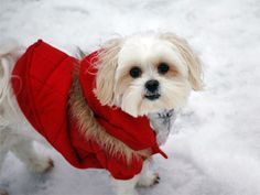 Adorable little dog winter hiking in Canada. Love the parka! <3