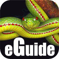 Amazing snakes photographs with information about each species Ajanta Ellora, Reality Apps, App Development, Snakes, Mobile App, Iphone, Outsider Art, Ios App, Amazon