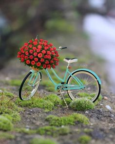 Best Flowers Quotes Little 65 Ideas Wallpaper Nature Flowers, Beautiful Nature Wallpaper, Beautiful Images, Cool Pictures For Wallpaper, Love Wallpaper, Wallpaper Backgrounds, Miniature Photography, Cute Photography, Flower Quotes