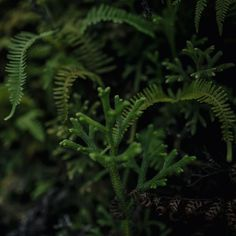 @eat_this_world posted to Instagram: The flora and fauna of Fjordland Nationalpark is insane! Sending out some #fern vibes today. Happy Friday!.- february 2019 -  #neuehorizonte #wanderlust #travelawesome #bbctravel #awesome_earthpix #roamtheplanet #agameoftones #neuseeland #newzealand #flora #EarthVisuals #earthfocus #fauna #nature #flora  #naturaleza #fauna #fjordland #naturephotography  #natura #instagram  #love #macro #a #instagood  #kiwipics #meioambiente Flora And Fauna, Fern, Happy Friday, New Zealand, Planets, Nature Photography, February, Wanderlust, Earth