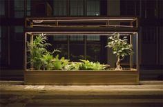 plants art - Google-Suche