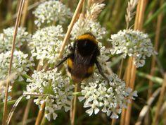 Bee (by Jordan)