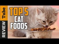 Best Dry Cat Food Brands | Pet Guide Canned Cat Food, Dry Cat Food, Turkey And Potato Recipe, Cat Food Brands, Best Cat Food, Youtube Cats, Online Pet Supplies, Cat Treats, Cat Grooming