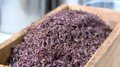 Insects Creeping Onto Menus in Latest Dining Trend - ABC News