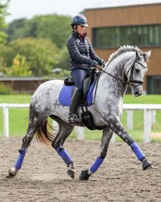 Blueberry matchy dressage set