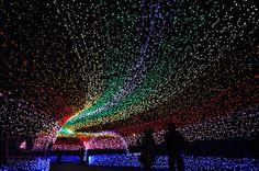 Découvrez le magnifique jardin Nabana no Sato illuminé de millions de LEDs