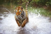Top 10 Wildlife Conservation Organizations: Wildlife Conservation Society