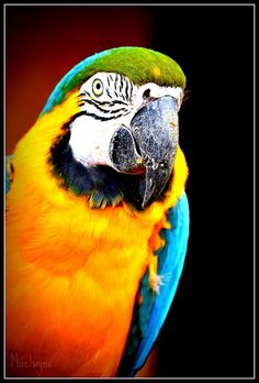 Parrot - this one is for my hubby, who wants on sooo bad! :)