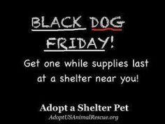 :-) folks on walmart parking lot selling pit bull puppies!