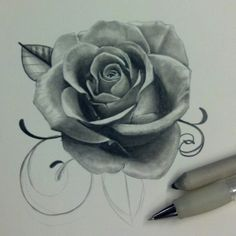 Rose drawing done in mechanical pencil by Breanne Armenta