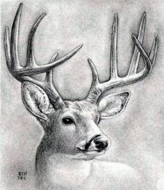How to draw a deer head, buck - Hundreds of drawing tuts on this site