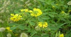 Kai, Herbs, Health, Plants, Health Care, Herb, Plant, Planets, Salud
