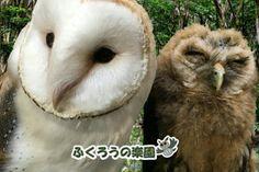 Owl Cafe on Kokusai Street in Naha, Okinawa