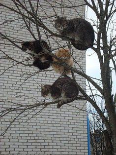 http://ift.tt/1KdQeOt - http://cats.abafu.net/cats/httpift-tt1kdqeot-79
