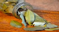 Watch This Video Sensational Natural Remedies for Chest Congestion Relief Ideas. Captivating Natural Remedies for Chest Congestion Relief Ideas. Burning Bay Leaves, Laurier Sauce, Chest Congestion Remedies, Lose 15 Pounds, 45 Pounds, Natural Health Remedies, Health Benefits, Health Tips, Herbalism