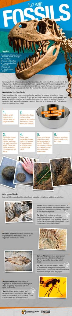Make your own fossils instructographic http://www.connectionsacademy.com/blog/posts/2013-07-26/Fun-with-Fossils-Instructographic-Make-Your-Own-Fossils-Activity.aspx #science #STEM