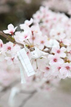 Primavera Hanami Style in Giappone la primavera è rosa