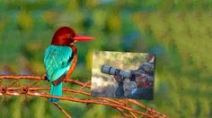 Photographing the beauty of birds
