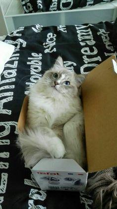 Levi 8 mnd oud Cats, Animals, Gatos, Animales, Animaux, Animal, Cat, Animais, Kitty