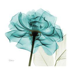 Teal Rose Art Print at AllPosters.com