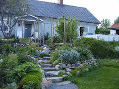 Lindas trädgårdsblogg: En slänt med stenterasser