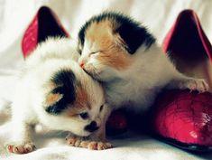 Kitty's Kittens [redux]  kitten
