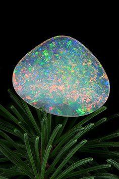 opal by chinellato photo