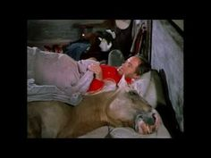 """▶ Trigger sleeps with Bob Hope """"SON OF PALEFACE"""" Roy Rogers SKIT - YouTube http://www.youtube.com/watch?v=elhhgyVWzPY"""
