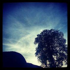 #dark #tree #sky #takenbyme