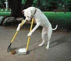 It's a clean dog!