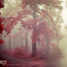 A crisp Autumn breeze. ❤️ : Photo