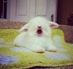 Big yawn! <3