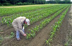 Maine organic farmers group aims to set up $3 million training fund - The Portland Press Herald / Maine Sunday Telegram