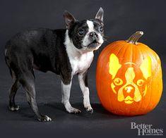 Dog stencils for Pumpkin carving