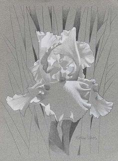 Brian Davis Künstler - - - New Ideas Watercolor Disney, Watercolor Flowers, Watercolor Paintings, Brian Davis, Still Life Drawing, Hyperrealism, Iris Flowers, Pastel Art, Pretty Wallpapers