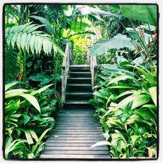 . . . . . . . #pinterest #green #verdant #botanicals #jungalow #lush #crazyplantlady #plantlove #landscaping #tropicalplants #tropicalgarden #gardendesign #instahome #photography #bhghome #hbmystyle #instadaily #palmtrees #travel #explore #gardeninspiration #inspiration